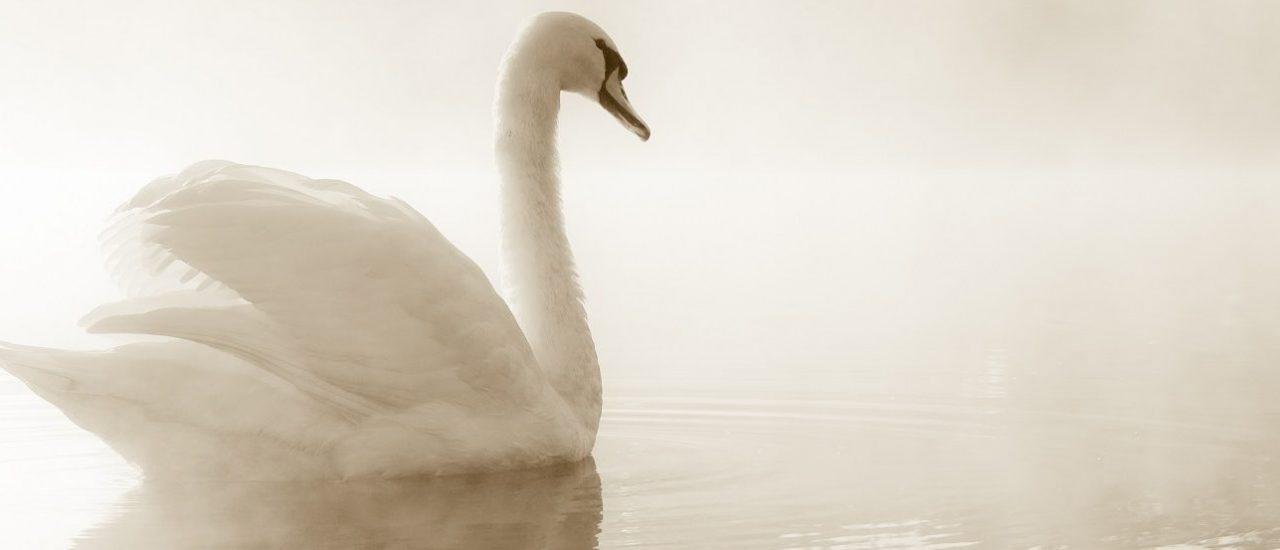 New Evening Meditation Classes